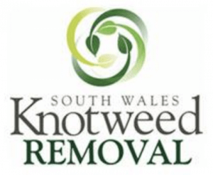 Knotweed Treatment and Control Port Talbot