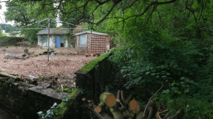 Cross Hands Successful Removal of Japanese Knotweed