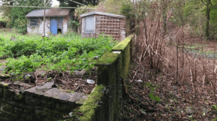 Cross Hands Successful Removal of Knotweed