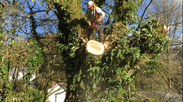 Tree Felling South Wales