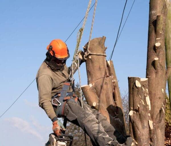 Tree felling South Wales