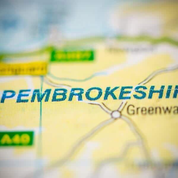 Japanese Knotweed Pembrokeshire