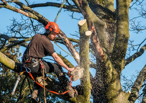 Tree Felling South Wales FAQ's