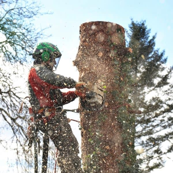 Tree Services Pontarddulais