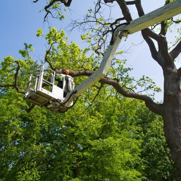 Tree Services Swansea