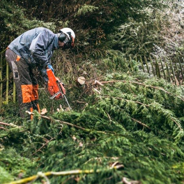 Tree Services Llandovery