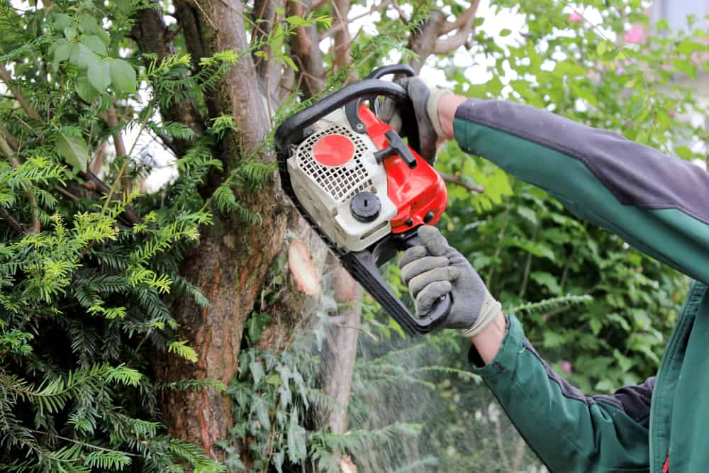 Tree Services Ystradgynlais