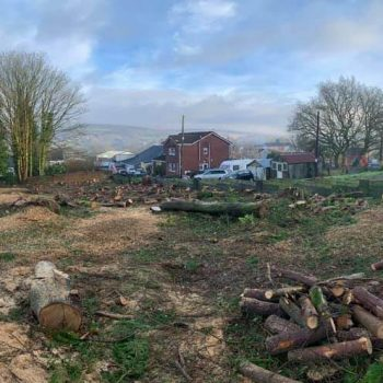 Removing Cyprus trees South Wales