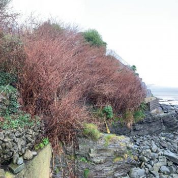 Weed removal New Quay, Ceredigion