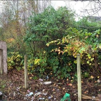 knotweed and brambles before photo